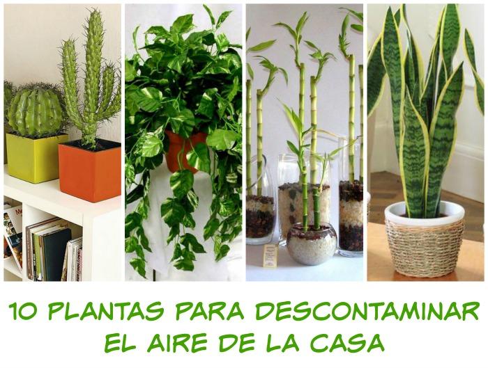 10 plantas para descontaminar el aire de la casa
