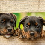 4 Health Benefits Of Using Bug Repellent For Your Dog