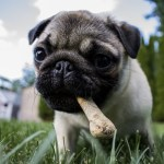 4 Benefits Dog Food Can Provide
