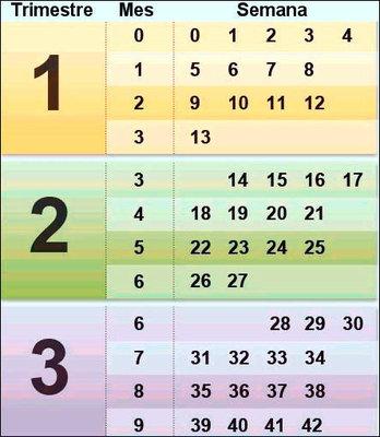 d41ed2909 Calendario de conversión de semanas a meses en el embarazo - Mamá y ...