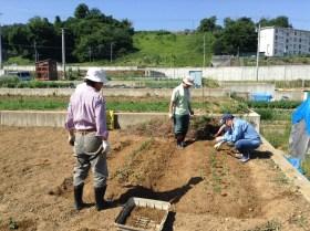大豆の定植