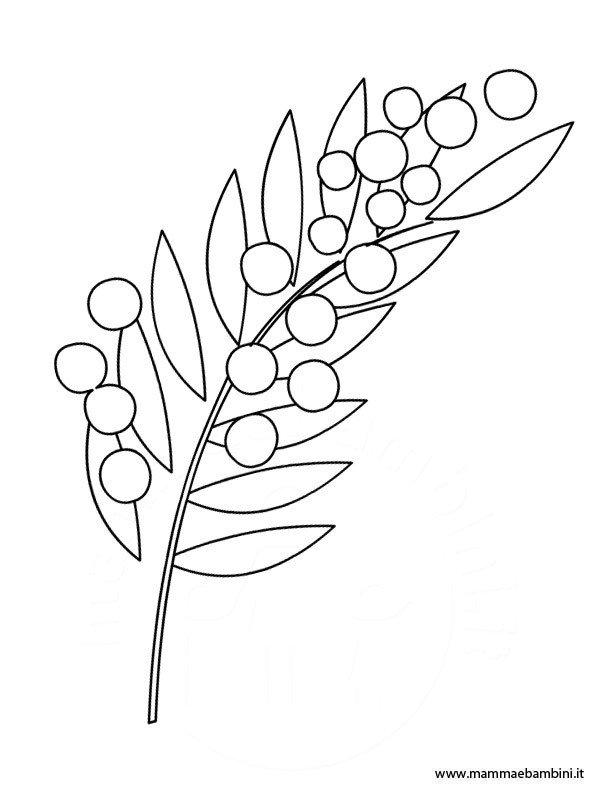 Disegno mimosa da stampare e colorare