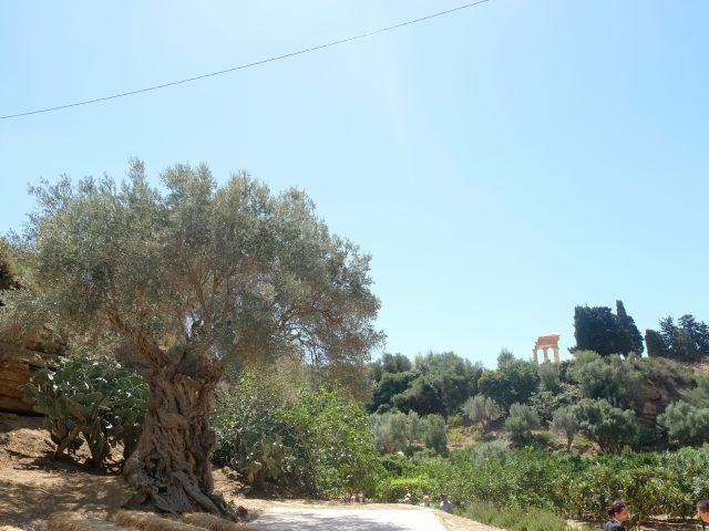 Sicilia Giardino della Kolymbethra MammaInViaggio