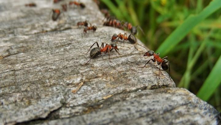 Aiuto! Invasione di formiche sul camper