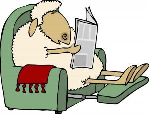 Sheep reading newspaper