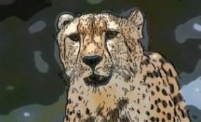 Douglas Cheetah