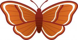 Enforced Domestication Moth