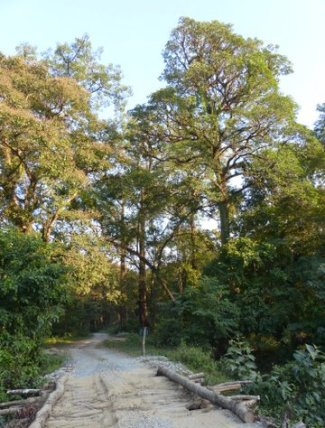 Manas National Park