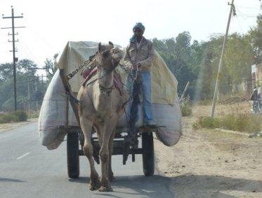camel cart, India