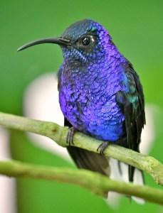 Nic-bird-list