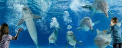 L'avventura dei parchi acquatici: divertimento allo stato puro per i più piccoli
