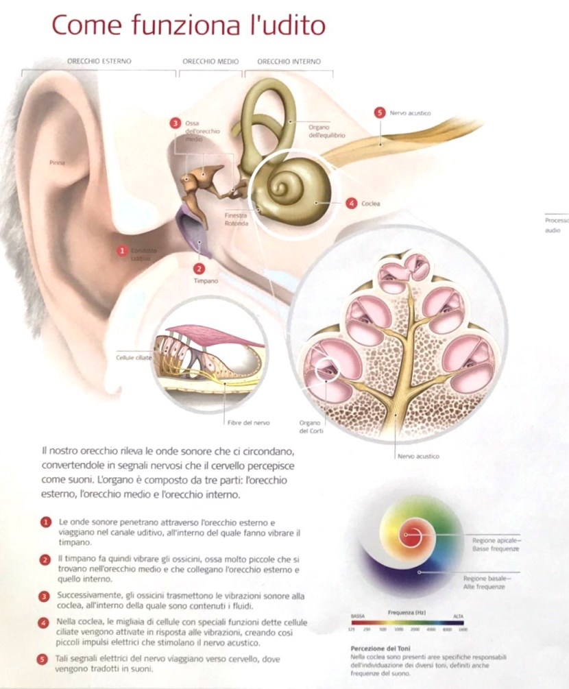 Come riconoscere un problema uditivo nei bambini