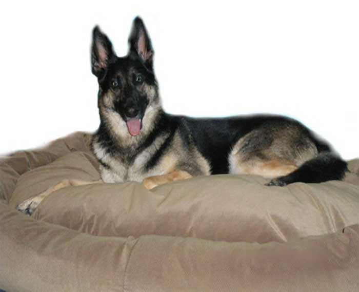 Mammoth Dog Beds Canada  Large Breeds  Vet Recommended