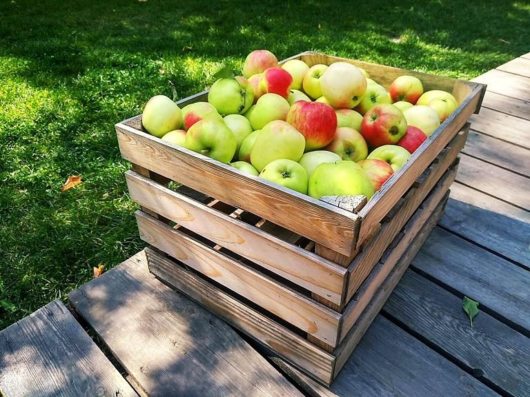 baśniowe sady Klemensa