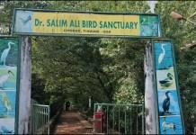 डॉक्टर सलीम अली बर्ड सँच्युअरी पर्यटन स्थळ गोवा