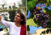 घरीच द्राक्षे स्ट्रॉबेरी सारख्या फळांची लागवड