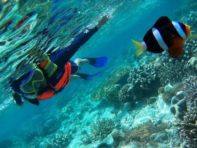 pemandangan bawah air pulau lihaga, minut
