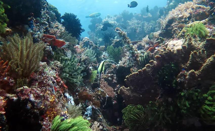 eloknya pemandangan taman laut bunaken (by diveplanit.com)
