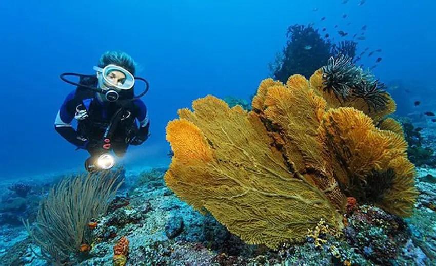 seorang diver di perairan pulau gangga