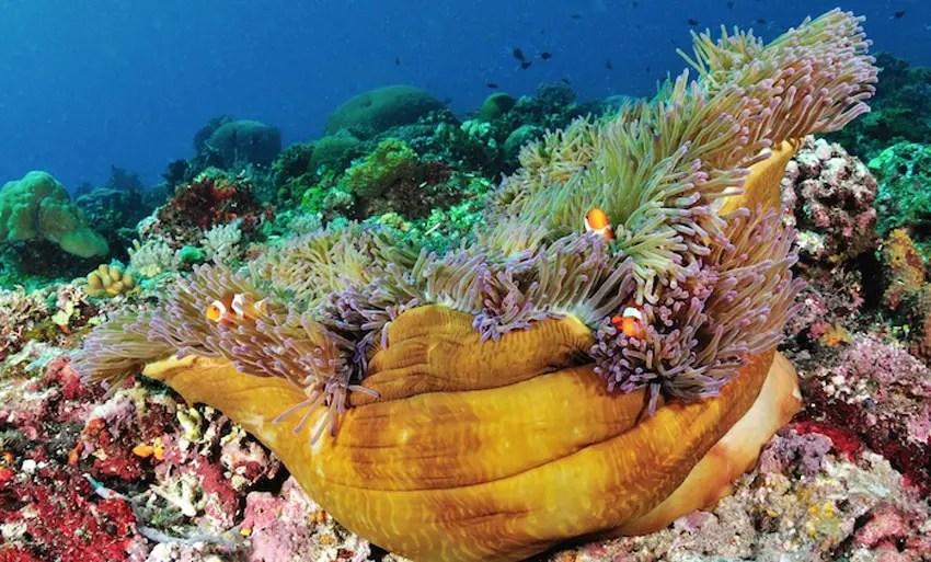 Pulau Bunaken: Wisata Manado Kelas Dunia