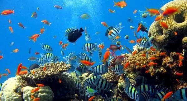 taman laut bunaken 2