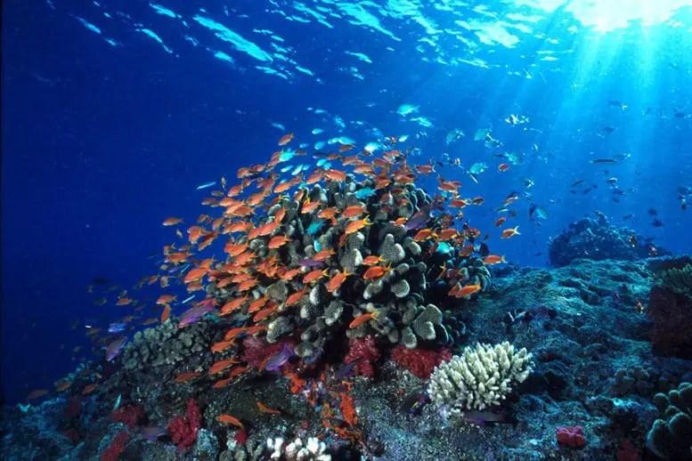 taman laut bunaken 3