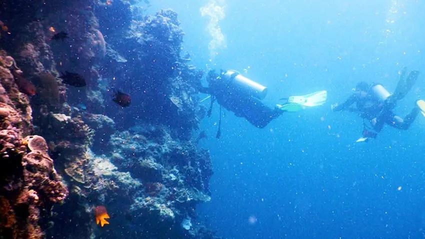 underwater-great-walls-cuma-ada-di-taman-laut-bunaken