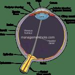 Visual Sensation – Working process of eye | General Psychology