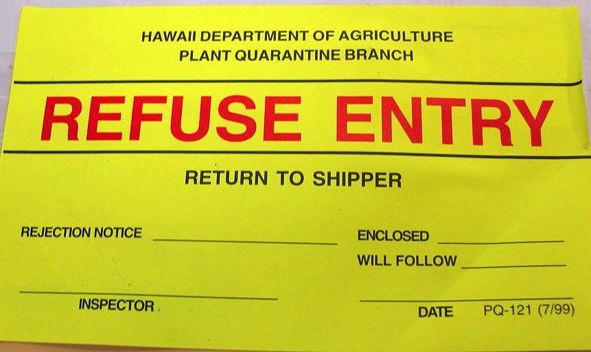 Epipremnum pinnatum (refused entry sticker on box). (c) Forest & Kim Starr. (CC BY 3.0)