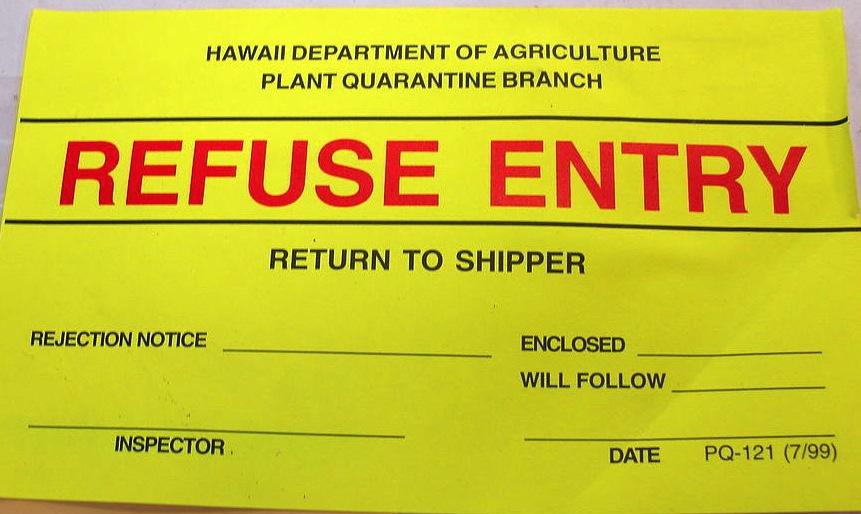 Epipremnum pinnatum (refused entry sticker on box). (c) Forest & Kim Starr. (CC BY 3.0)