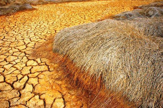 Prévison climatique bon - Prévision saisonnière des caractéristiques agro climatiques  pour les pays du Golfe de Guinée : la 3è édition se tient à Lomé