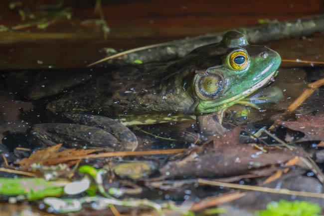 Manchaug Pond Foundation Conservation Wildlife
