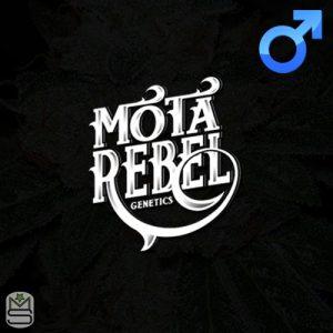 Mota Rebel Genetics – Yzer Kush V2