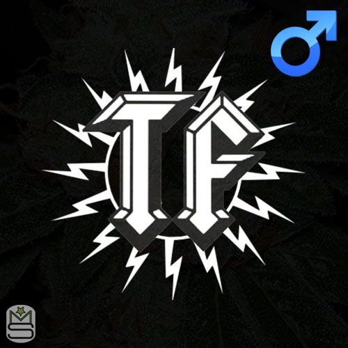 ThunderFudge Genetics - Regular