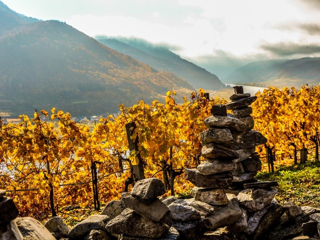 Vineyards of the Wachau region in autumn
