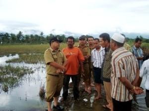 tinjau sawah banjir 231012