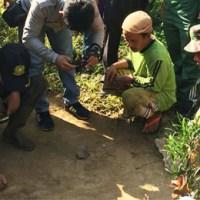 Kemunculan Harimau, Warga Tambangan Diminta Tenang