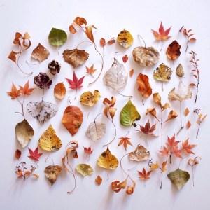 ja soon kim botanical arrangements 8