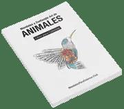 libro de mandalas de animales