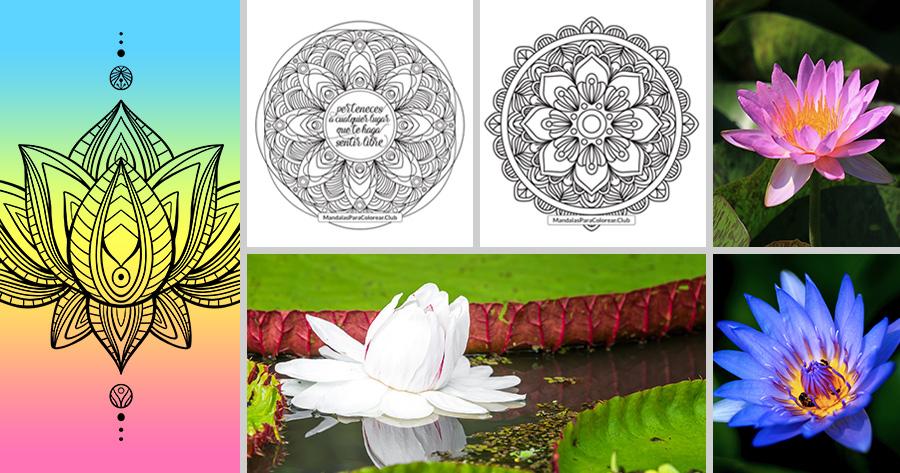 Mandalas de Flor de Loto Significado y Simbología