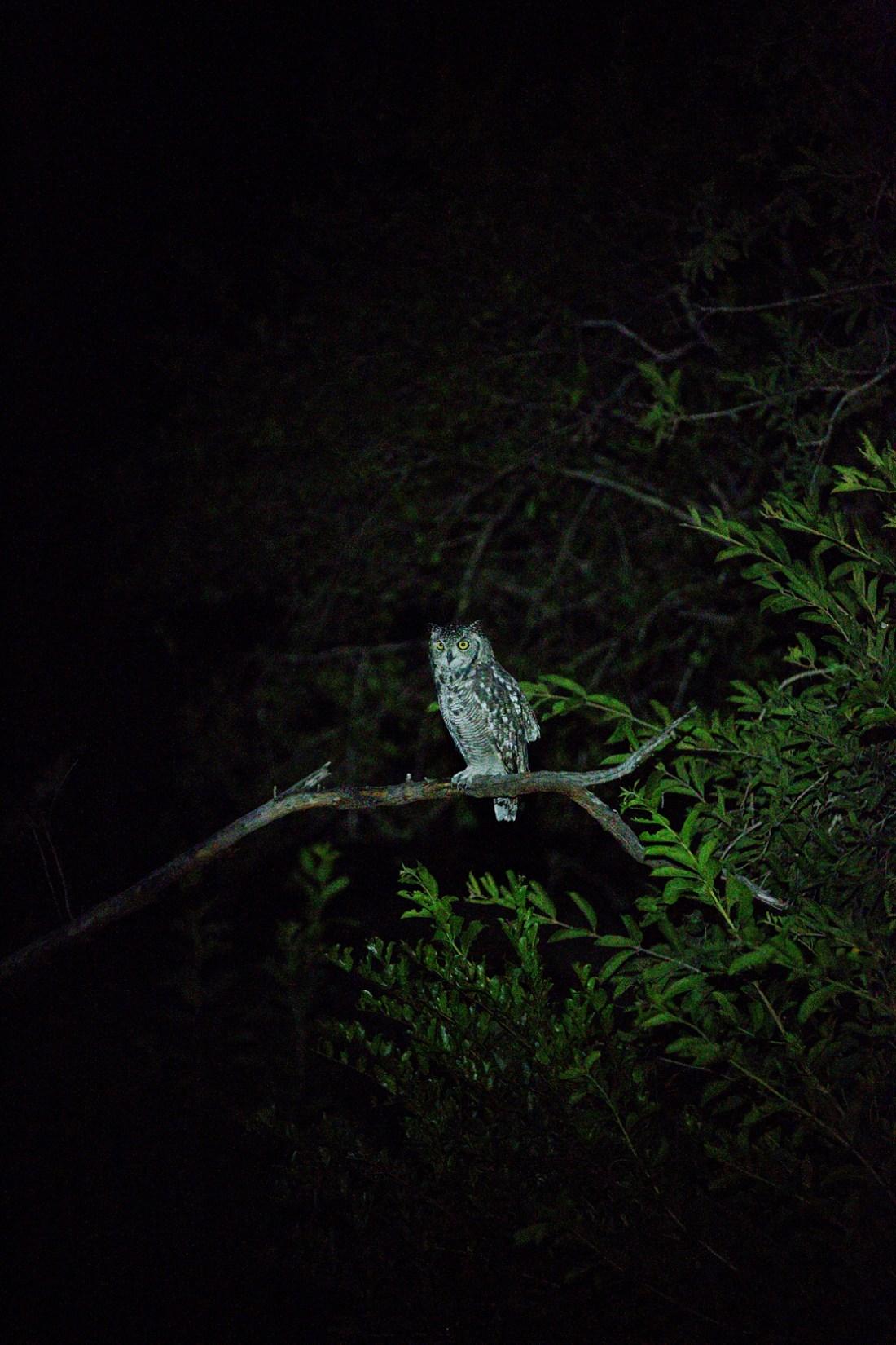 night safari at Kruger national park