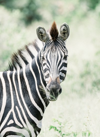 South Africa | Kruger National Park
