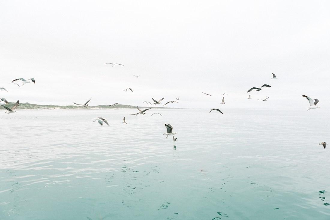 Gansbaai shark dive
