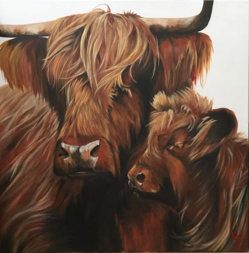 Highland cow and calf, 'Coorie-in'