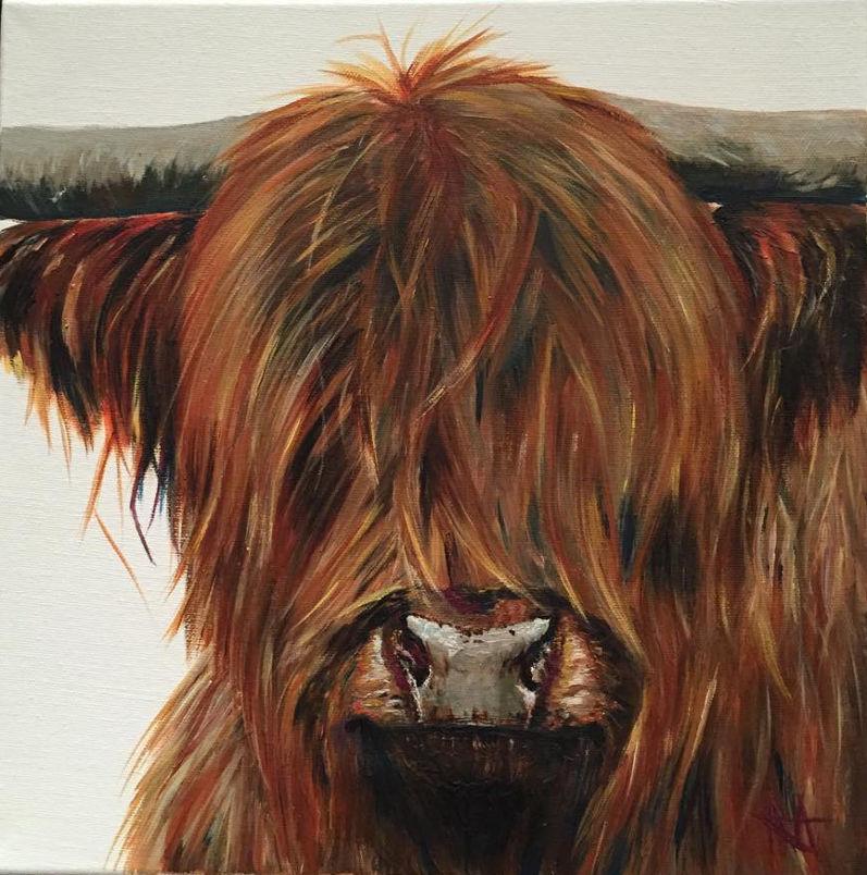 Nutmeg - Highland cow