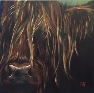 Scruffy - Highland bull