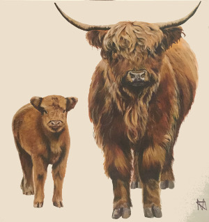 Highland cow and calf, 'Whisky and Ginger'