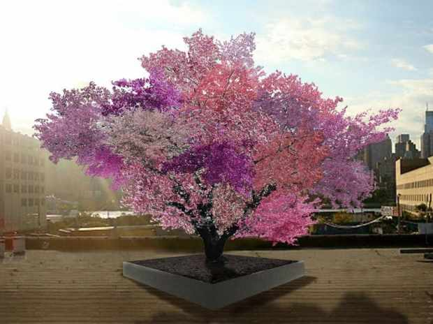 "Sam Van Aken's grafted fruit trees are still quite young, but this artist rendering shows what he expects the ""Tree of 40 Fruit"" to look like in springtime in a few years. Courtesy of Sam Van Aken"