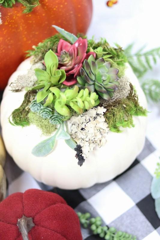 Succulent Pumpkins 2