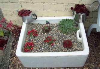 Freshly-planted Belfast sink with Sempervivum, Delosperma and Saxifraga